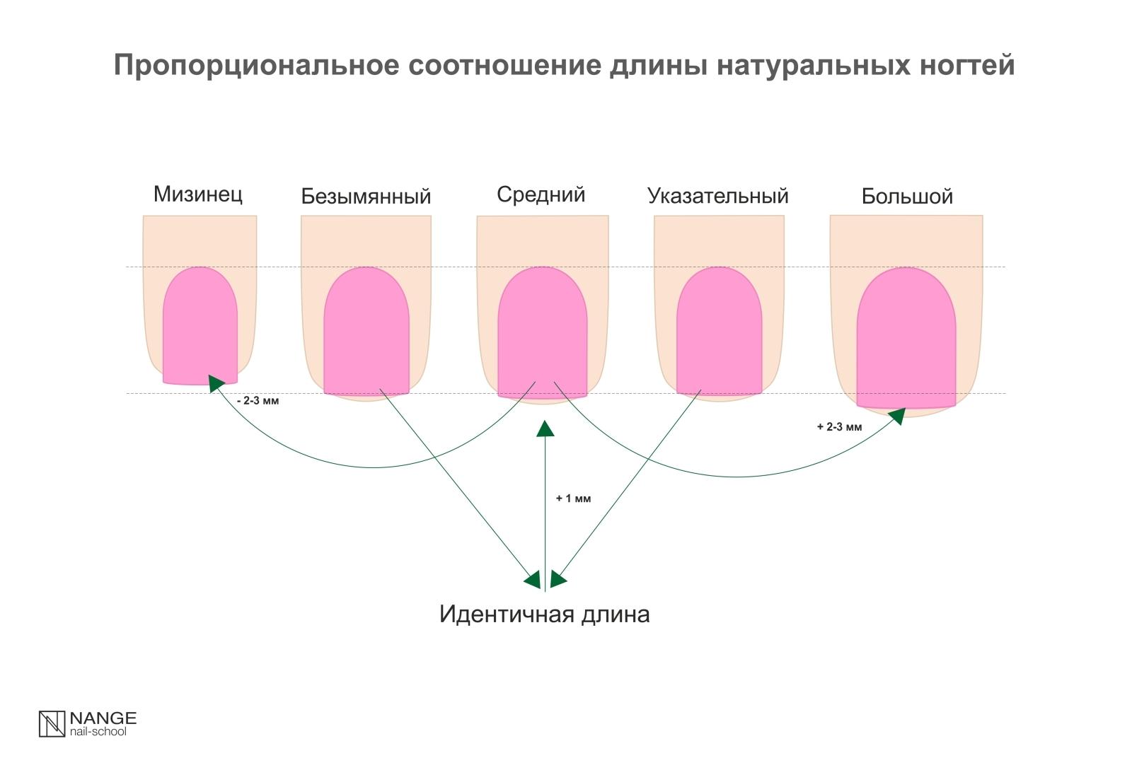 Пропорциональное соотношение длины натуральных ногтей